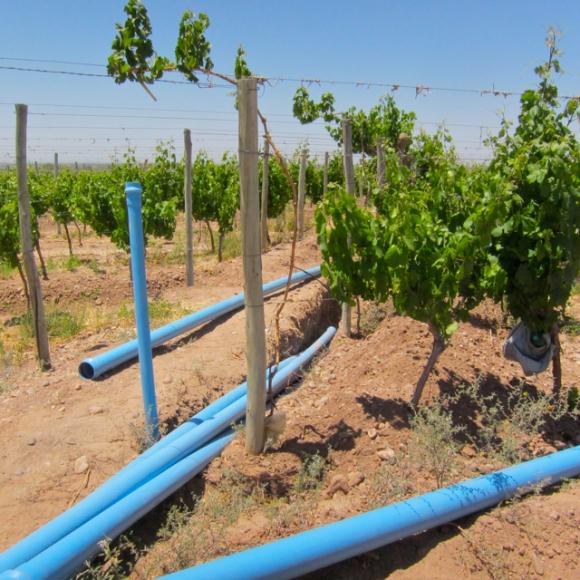 Irragation, Riego, Altos Las Hormigas Harvest 2012