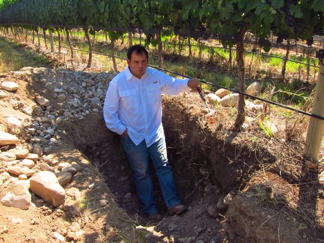 Altamira, Altos Las Hormigas, Harvest 2012, Pedro Parra Terroir Specialist