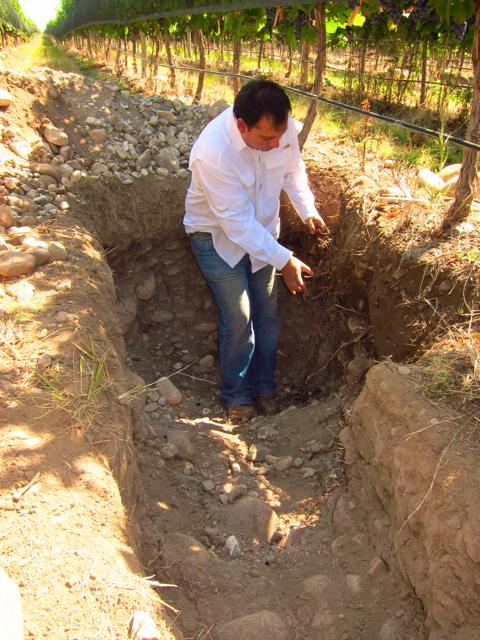 Altamira 2, Altos Las Hormigas, Harvest 2012, Pedro Parra Terroir Specialist