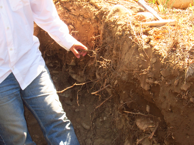 Altamira 3, Altos Las Hormigas, Harvest 2012, Pedro Parra Terroir Specialist