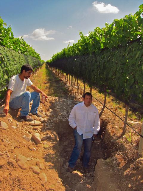 Altamira 4, Altos Las Hormigas, Harvest 2012, Pedro Parra Terroir Specialist