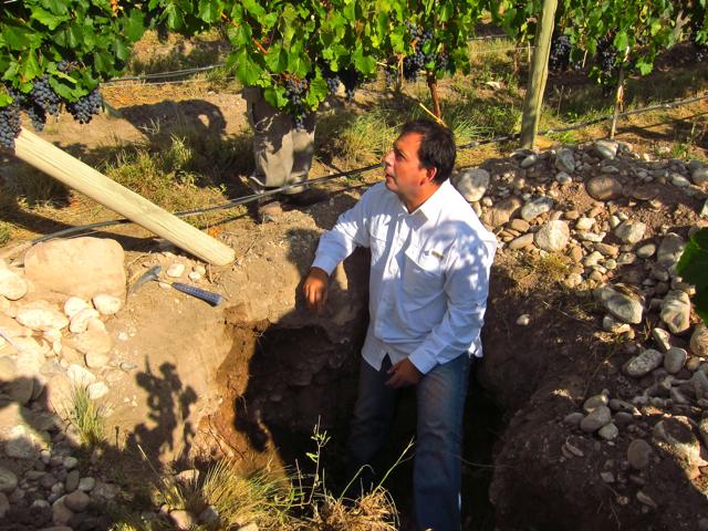 Gualtallary, Uco Valley. Altos Las Hormigas Harvest 2012, Pedro Parra Terroir Specialist