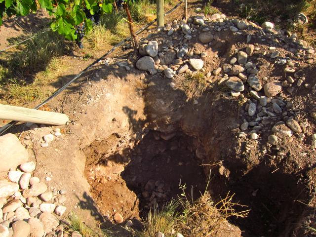 Gualtallary 4, Altos Las Hormigas, Harvest 2012, Pedro Parra Terroir Specialist