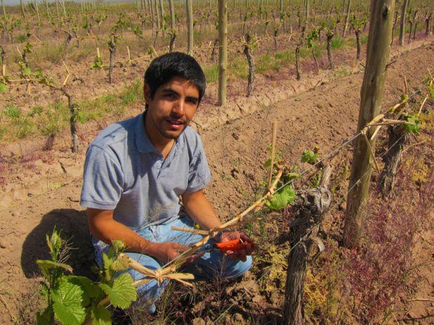Altos Las Hormigas, Bud Break, Harvest 2012