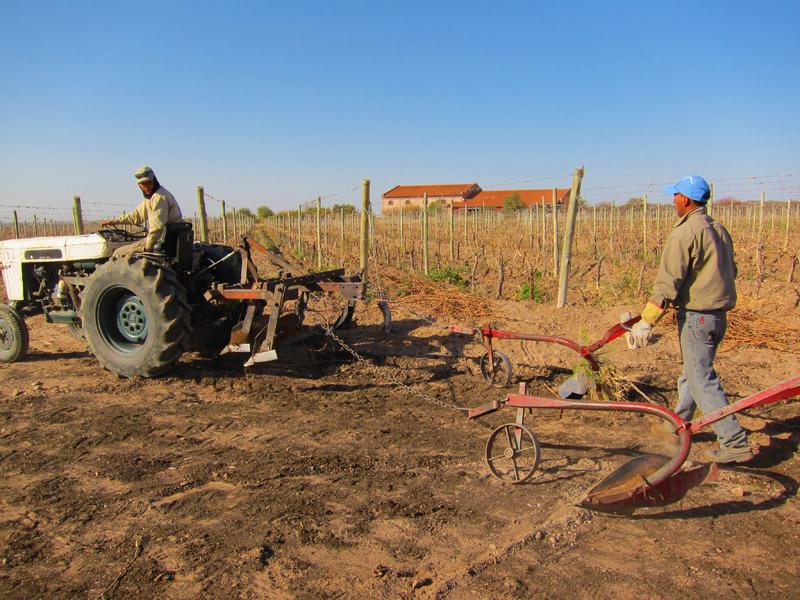 Organic Weed Control Altos Las Hormigas Harvest 2012