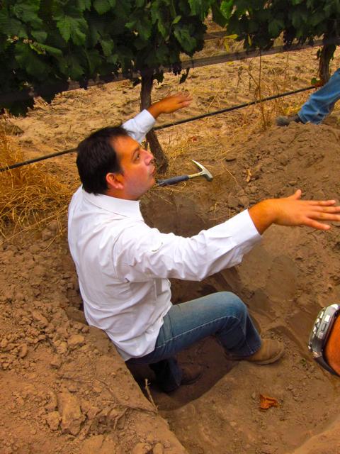 Perdriel, Mendoza. Altos Las Hormigas Harvest 2012, Pedro Parra Terroir Specialist