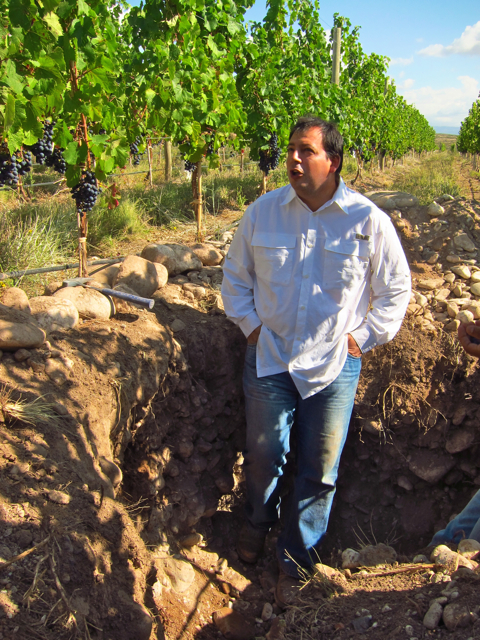 Vista Flores, Uco Valley. Altos Las Hormigas Harvest 2012, Pedro Parra Terroir Specialist