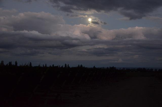 Harvest 2012, Altos Las Hormigas, Mendoza, Argentina Full Moon