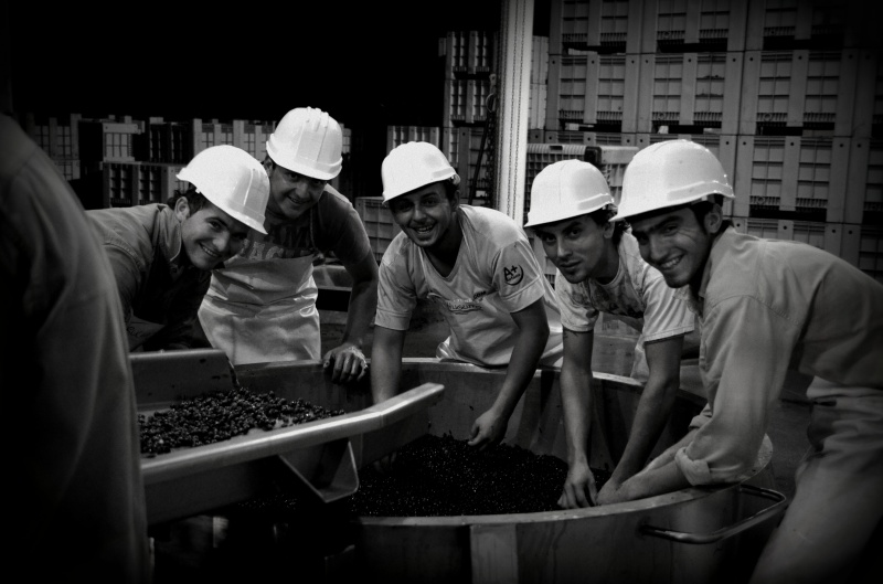 Team of Ants, Altos Las Hormigas Harvest 2012, Mendoza, Argentina