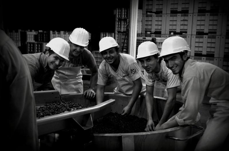 Team of Ants, Altos Las Hormigas Harvest 2012, Mendoza, Argentina