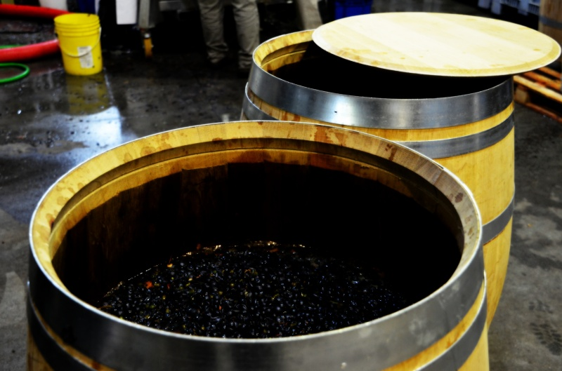 Barrel Fermentations, Microvinifications, Altos Las Hormigas 2012 Harvest