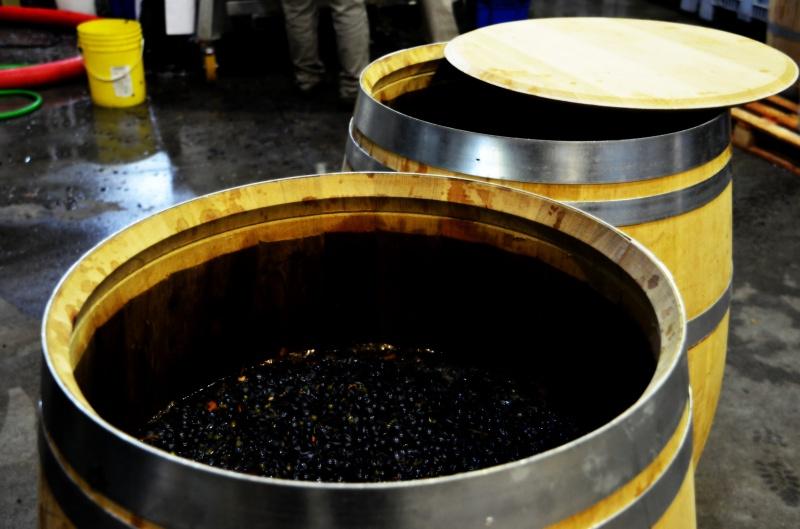 Barrel Fermentations, Microvinifications, Altos Las Hormigas 2012 Harvest