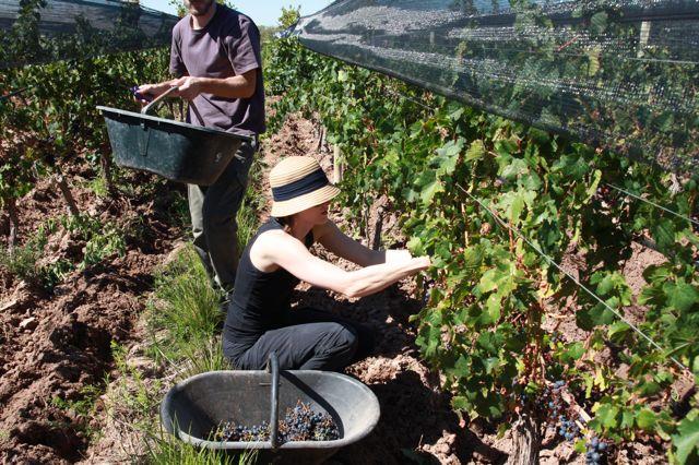 Altos Las Hormigas Harvest 2012. Mendoza, Argentina. Malbec.