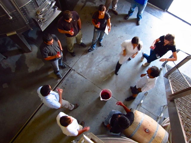 Microvinification Altos Las Hormigas Bonarda Argentina Barrel Fermented Spumante