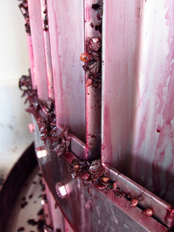 Pressed Malbec Grapes, Altos Las Hormigas, Harvest 2012, Mendoza, Argentina