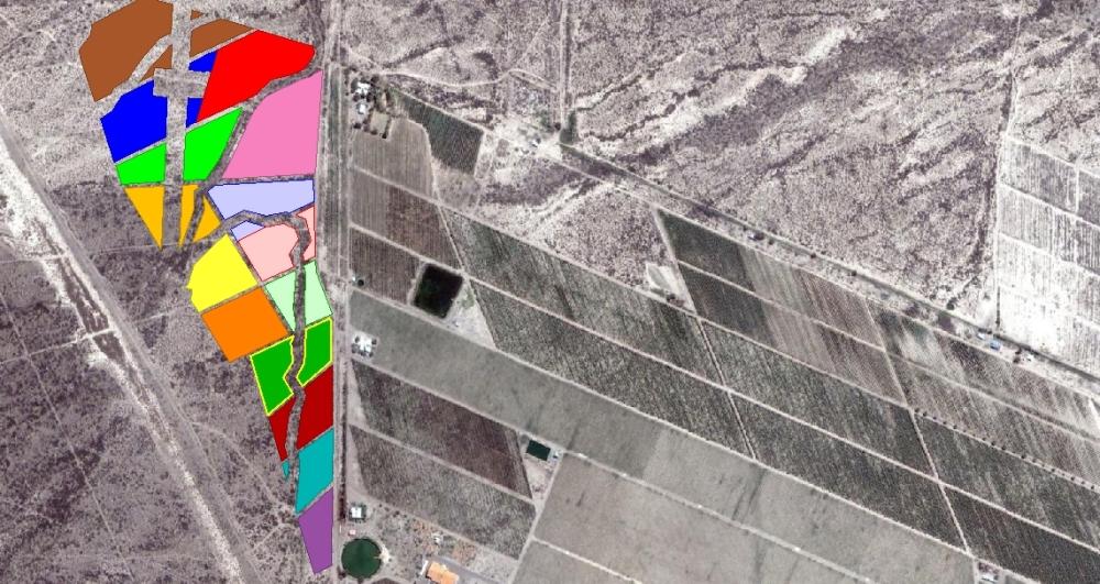 Altos Las Hormigas Vineyard Planting Malbec