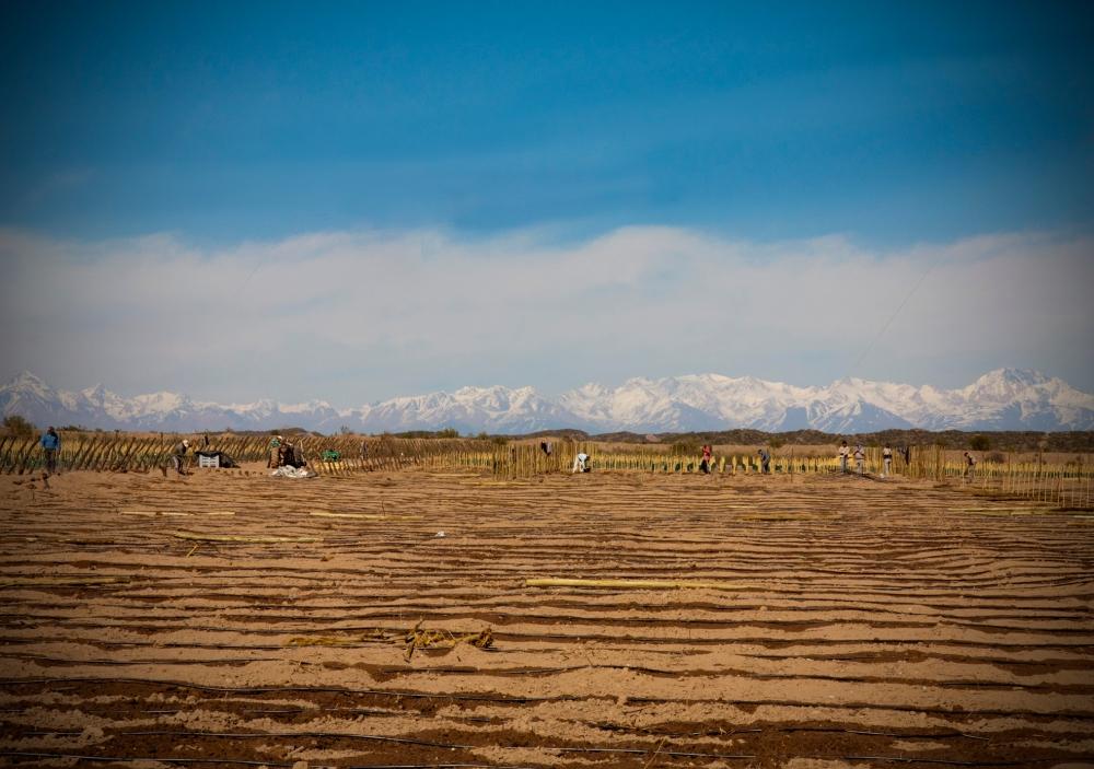 New Malbec Vineyard, Mendoza, Argentina, Biodynamic Wine, Altos Las Hormigas