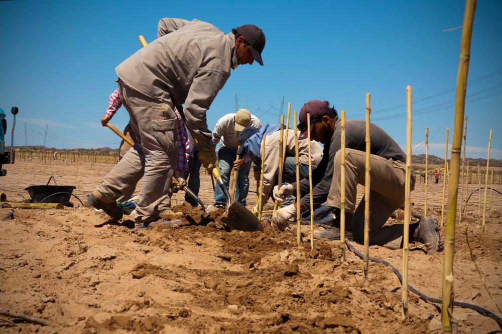 Planting a Biodynamic Malbec Vineyard, Bodega Altos Las Hormigas, Mendoza, Argentina Terroir Wine