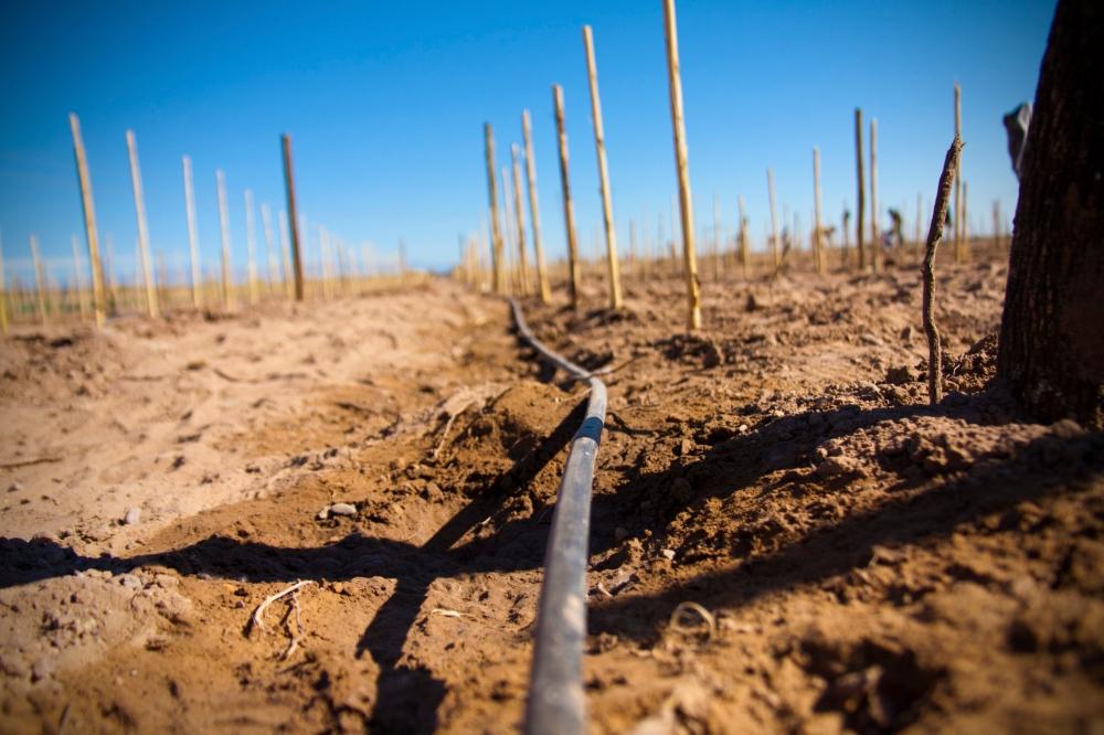 Drip Irrigation, Vineyard Altos Las Hormigas, Malbec, Mendoza, Argentina Wine