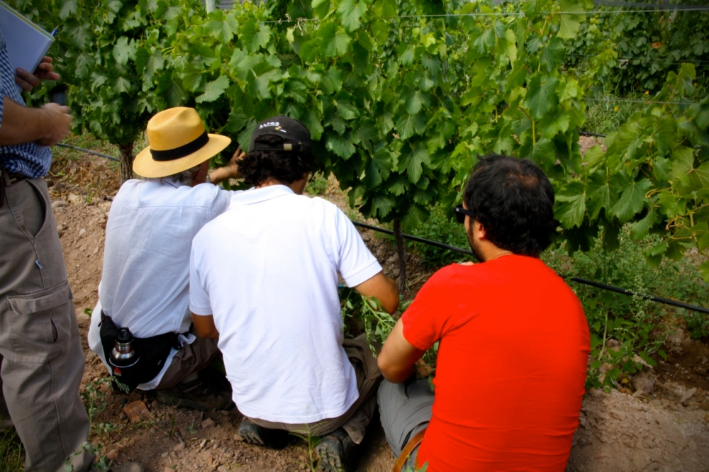 Alan York in the Altos Las Hormigas Vineyards, Mendoza, Argentina, Terroir, Biodynamic