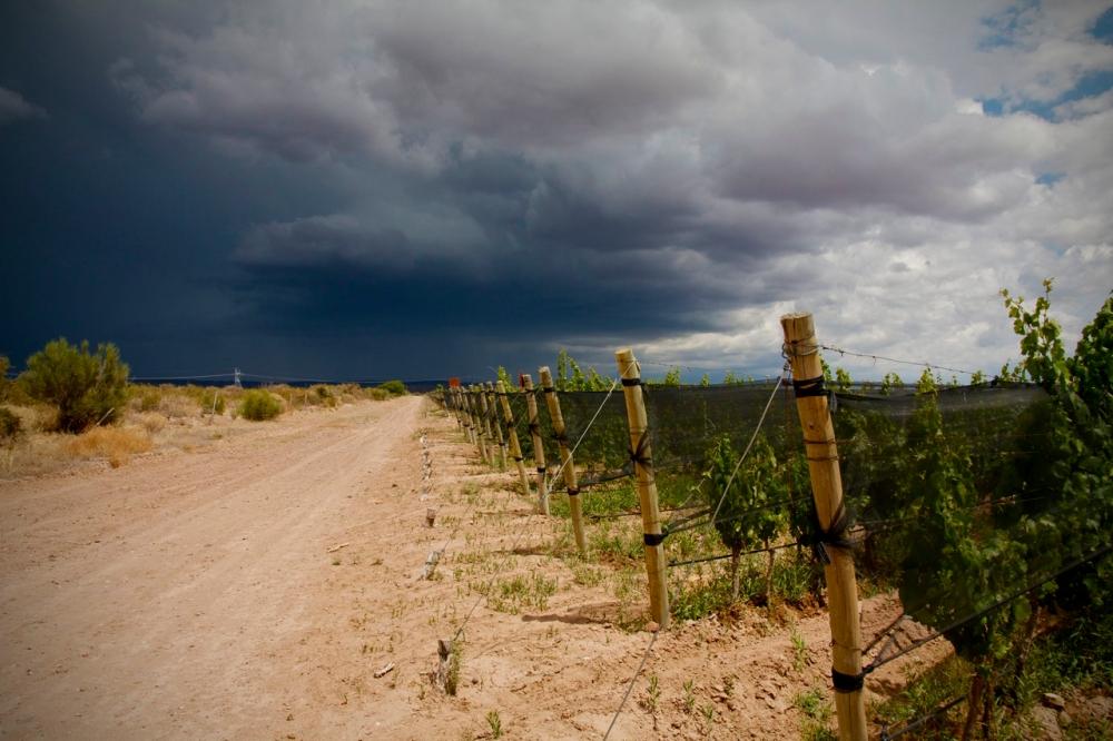 Altos Las Hormigas Malbec Vineyards, Mendoza, Argentina