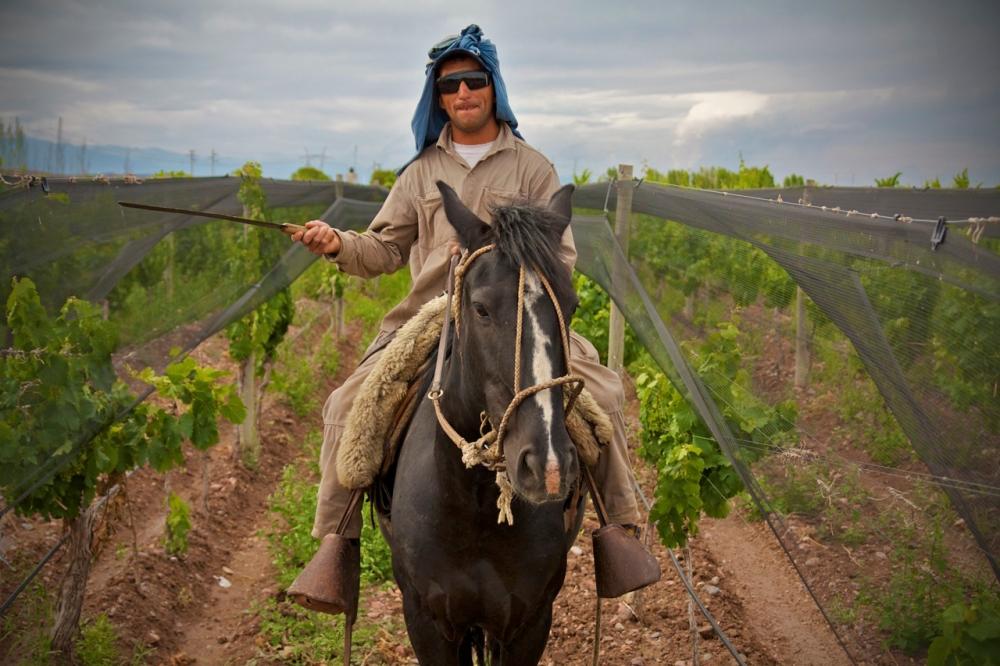 Altos Las Hormigas Malbec Vineyards, Terroir, Biodynamic Viticulture, Mendoza, Argentina