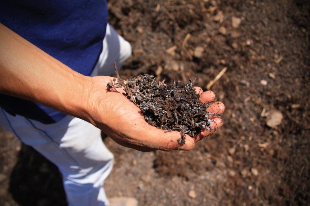 Compost Altos Las Hormgias Biodynamic Wine