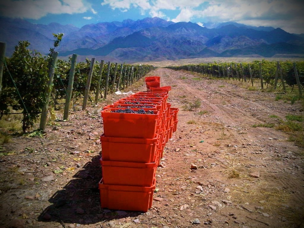 Dyonisos Vineyard, Vista Flores, Uco Valley Mendoza, Malbec Harvest 2013