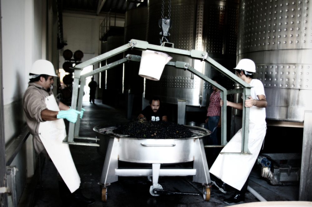 Gravity Winemaking, Altos Las Hormigas, Terroir Project, Mendoza, Argentina